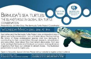 0323 Bermudas Sea Turtles