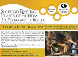 0607 Shorebird Breeding Islands of Florida