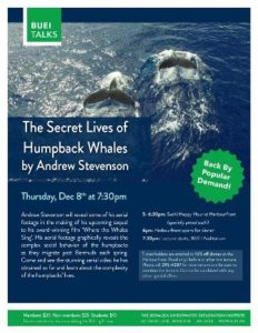 1208-secret-life-of-humpback-whales